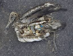 bird plastic